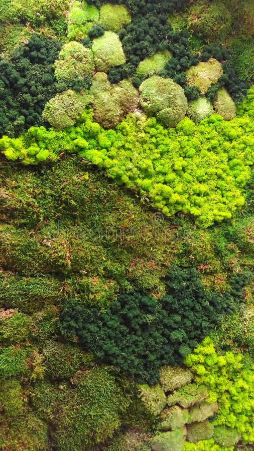 Aerial view of rainforest vegetation model | background texture. Aerial view of green vegetation forest model, serving as background texture artificial canopy stock photos