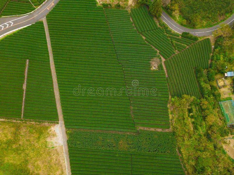 Aerial view of rice field in Shizuoka in Autumn season. Green ru stock photos