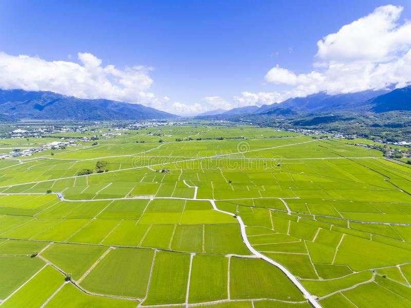 Aerial view of rice field valley. taiwan. royalty free stock photography