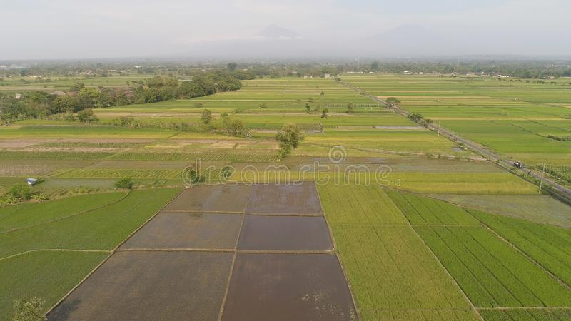 Rice field and agricultural land in indonesia. Aerial view rice fields, agricultural land with sown green in countryside. farmland with agricultural crops in stock image