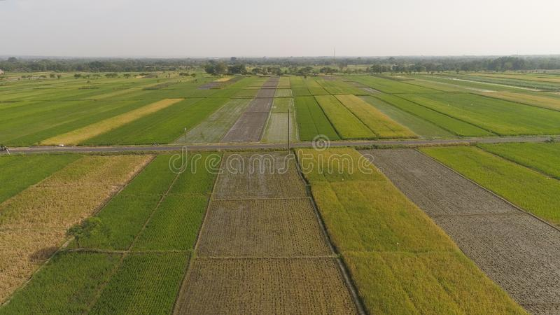 Rice field and agricultural land in indonesia. Aerial view rice fields, agricultural land with sown green in countryside. farmland with agricultural crops in royalty free stock photos