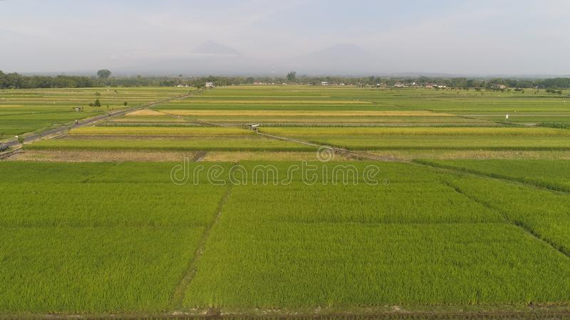 Rice field and agricultural land in indonesia. Aerial view rice fields, agricultural land with sown green in countryside. farmland with agricultural crops in royalty free stock image