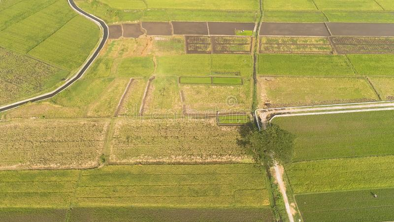 Rice field and agricultural land in indonesia. Aerial view rice fields, agricultural land with sown green in countryside. farmland with agricultural crops in royalty free stock photography