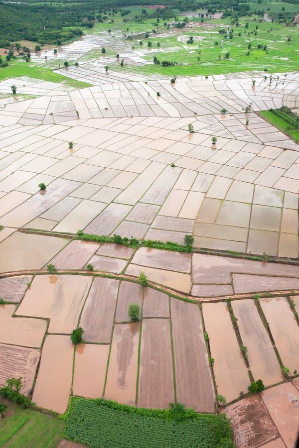 Aerial view of rice paddy fields in rainy season stock photos