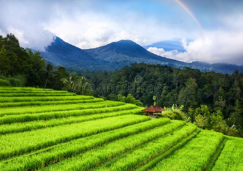 Aerial view of rice terraces and volcanoes. Landscape from drone. Agricultural landscape from the air. Rainbow above mountains. UN. ESCO World Heritage stock images