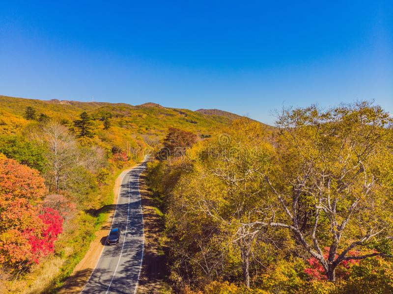 Aerial view of road in beautiful autumn forest at sunset. Beautiful landscape with empty rural road, trees with red and royalty free stock image