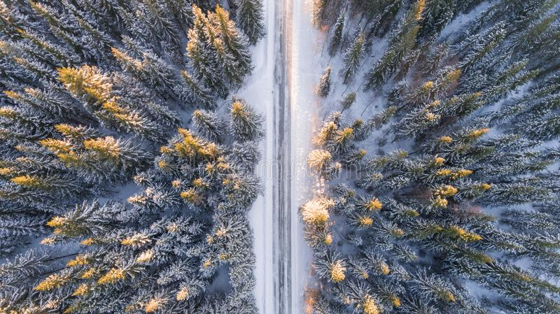 Aerial view of road through fir forest stock photos