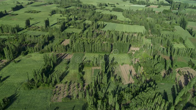 Aerial view of rural areas, poplar trees and farmland stock images