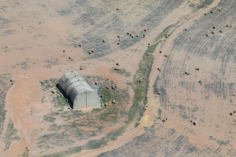 Aerial view of sheep around an old storage shed. In Merredin, Western Australia stock image