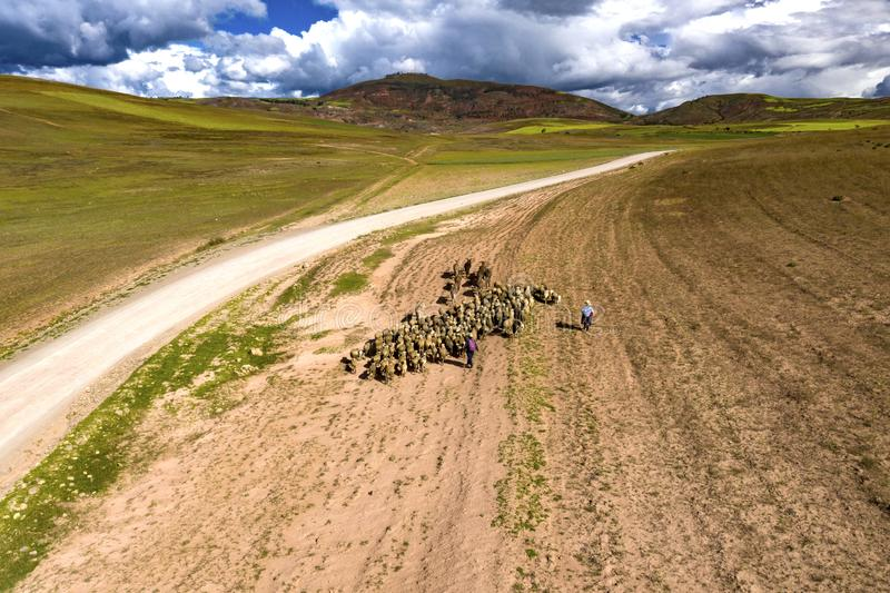 Aerial view of sheep flock traveling on a greenery alpine meadow at the Andes range. stock photo