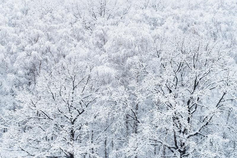 Aerial view of snow-covered oak and birch trees royalty free stock images
