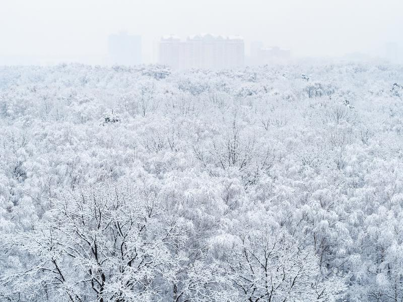 Aerial view of snow-covered trees in city park royalty free stock image