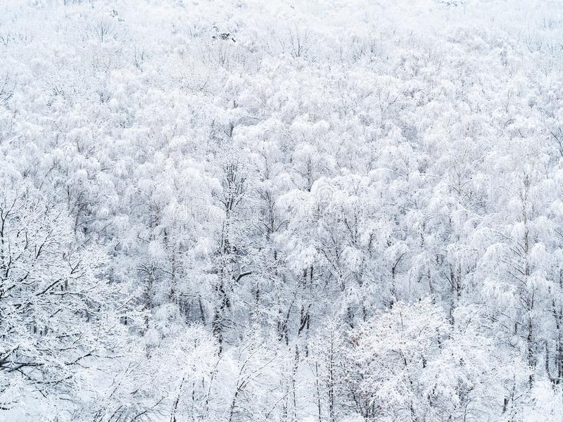 Aerial view of snow-covered trees in forest stock photography