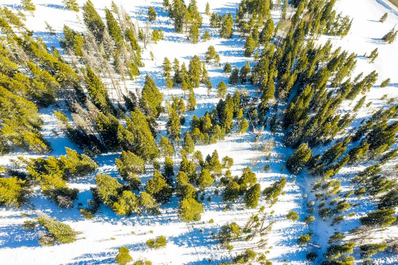 Aerial view snow fall top to bottom on pine trees in Colorado stock photo