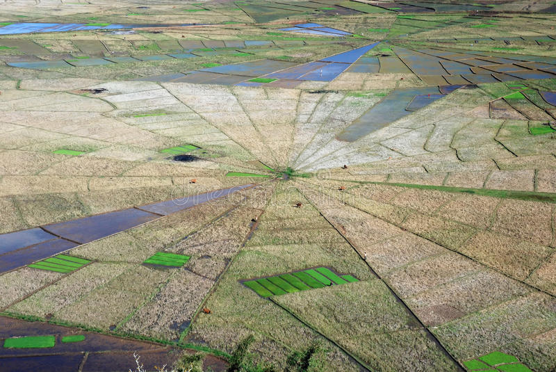 Aerial view spiders web shaped rice fields stock photos