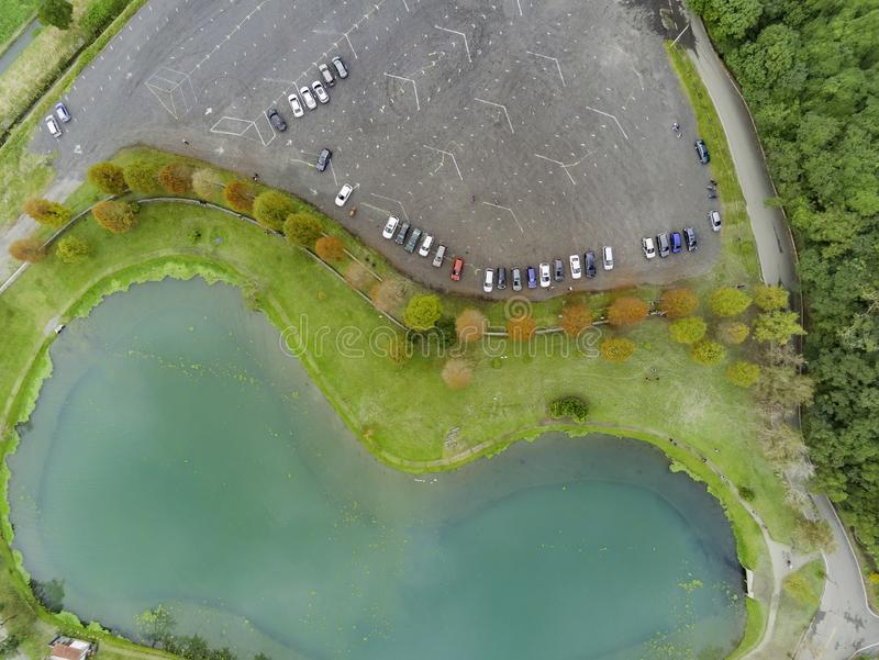 Aerial view of Taxodium distichum in fall color around the clam shape lake stock photo