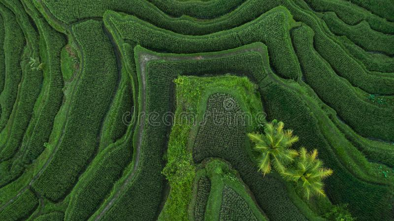 Aerial view of Tegallalang Bali rice terraces royalty free stock photography