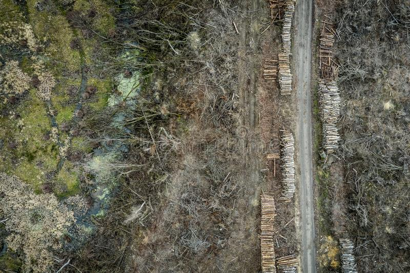 Aerial view of terrible deforestation, destroyed forest for harvesting. Europe royalty free stock photo