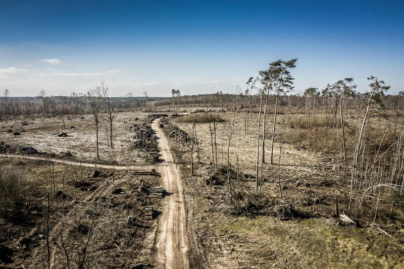Aerial view of terrible deforestation, logging, environmental destruction, Poland. Europe royalty free stock images