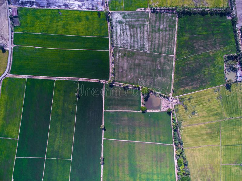 Aerial view of texture and pattern of green rice fields. Aerial view of texture and pattern of green and yellow rice field in Phichit, Thailand royalty free stock images