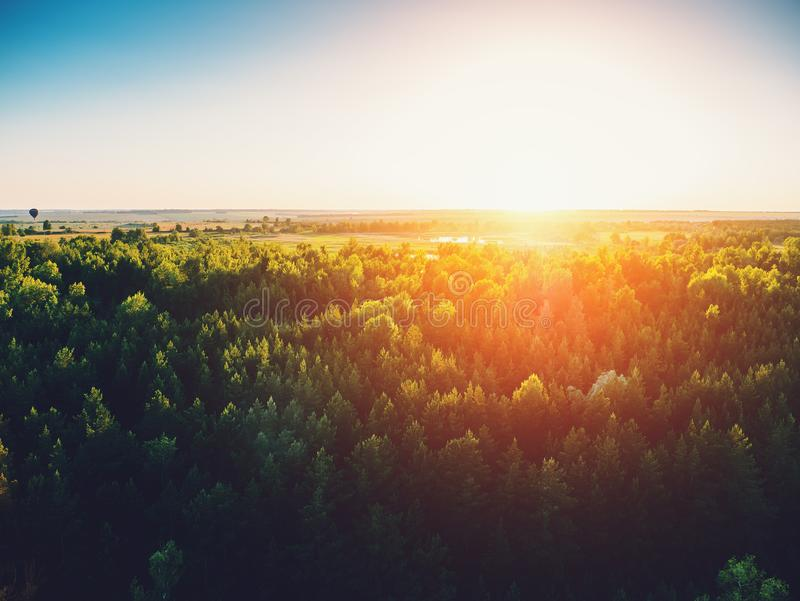 Aerial view or top view from drone or aerostat to summer green pine nature forest at sunset time. Toned stock image