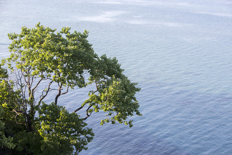 Aerial view of a tree at the beautiful beach in Katerini, Greece.  stock photos