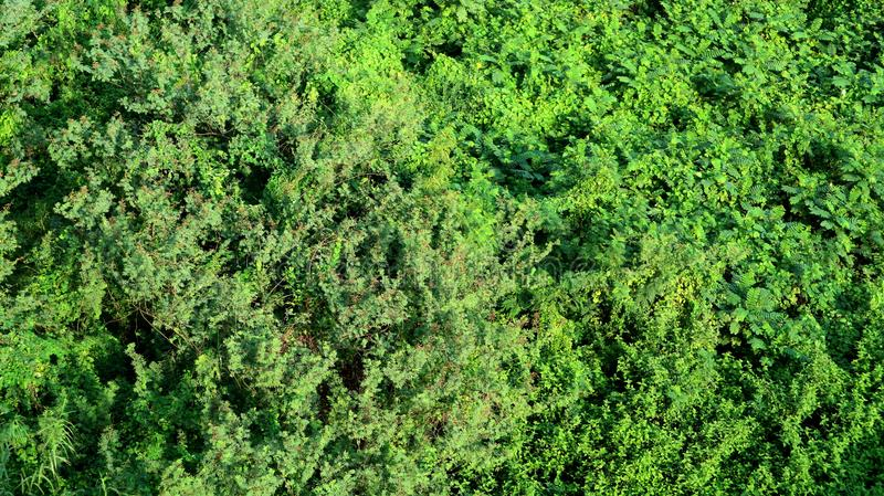 Aerial view of an urban tree canopy royalty free stock photo