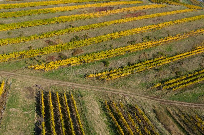 Aerial view of vineyard stock images