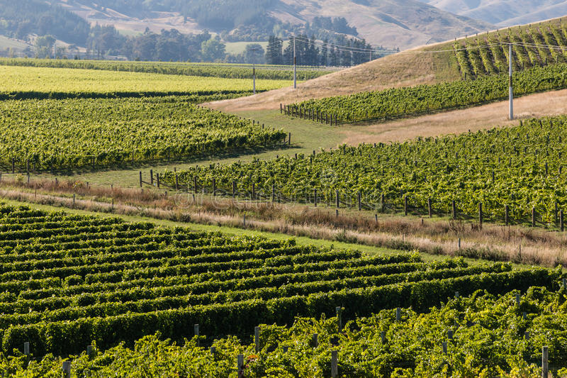 Aerial view of vineyard stock photography