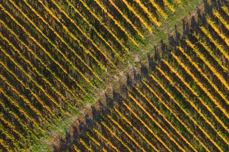 Aerial view of vineyard stock photo