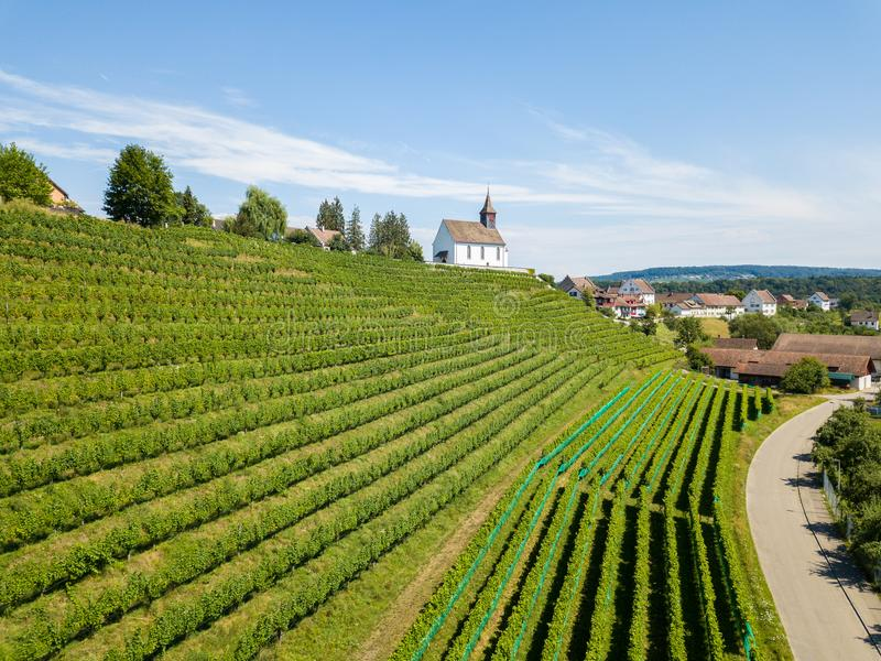 Aerial view of the vineyards royalty free stock image