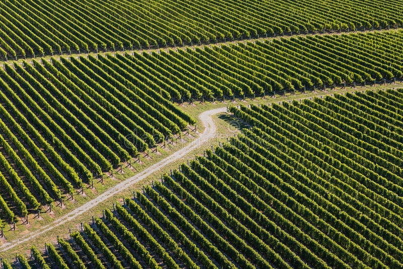 Aerial view of vineyards stock photo