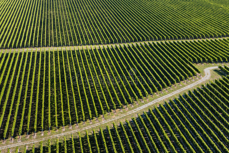 Aerial view of vineyards royalty free stock image