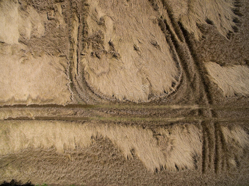 Aerial view of a wheat field broken by the last rain with a thunderstorm. Destruction of cereal crops stock image