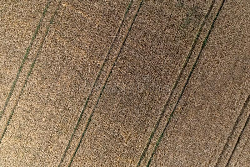 Aerial view of wheat field and tracks from tractor agricultural texture or background of summer agriculture landscape stock photo