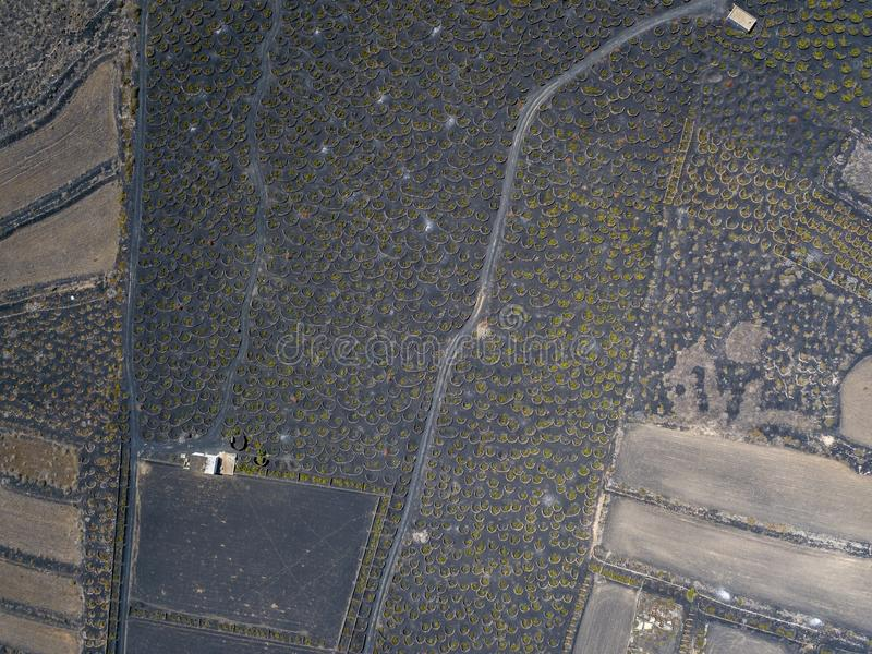 Aerial view of the wine cultivations on the volcanic soils of the island of Lanzarote. Canary Islands, Spain. Wine production. Aerial view of the wine stock photo