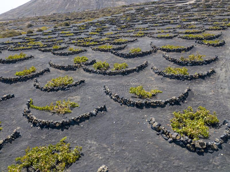 Aerial view of the wine cultivations on the volcanic soils of the island of Lanzarote. Canary Islands, Spain. Wine production. Aerial view of the wine royalty free stock photos