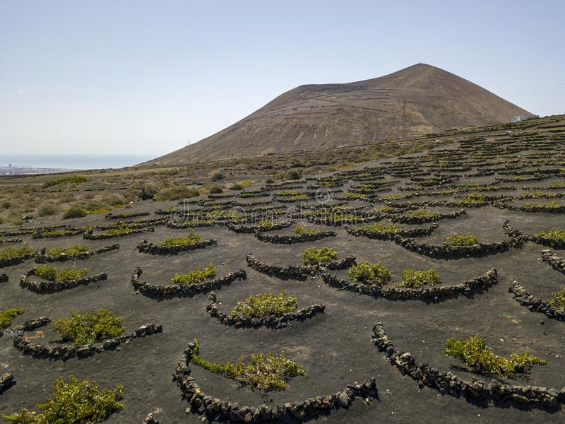 Aerial view of the wine cultivations on the volcanic soils of the island of Lanzarote. Canary Islands, Spain. Wine production. Aerial view of the wine royalty free stock images