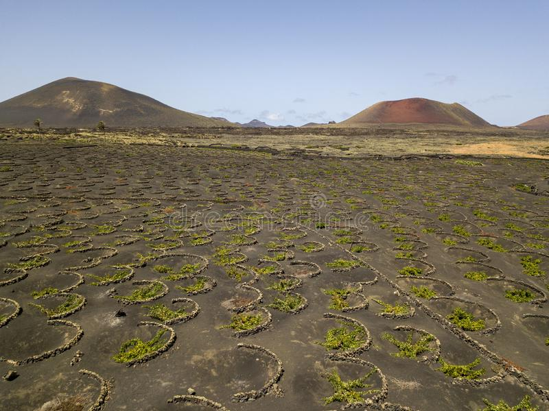 Aerial view of the wine cultivations on the volcanic soils of the island of Lanzarote. Canary Islands, Spain. Wine production. Aerial view of the wine stock images