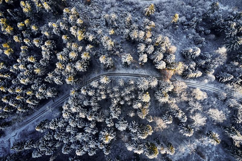 Aerial view at the winter forest from above. Pine trees as a background with a path going trough the trees. Winter. Landscape from air. Natural forest royalty free stock photo