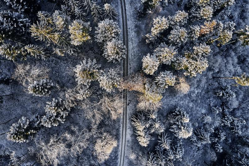 Aerial view at the winter forest from above. Pine trees as a background with a path going trough the trees. Winter. Landscape from air. Natural forest stock images