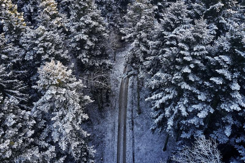 Aerial view at the winter forest from above. Pine trees as a background with a path going trough the trees. Winter. Landscape from air. Natural forest royalty free stock photography
