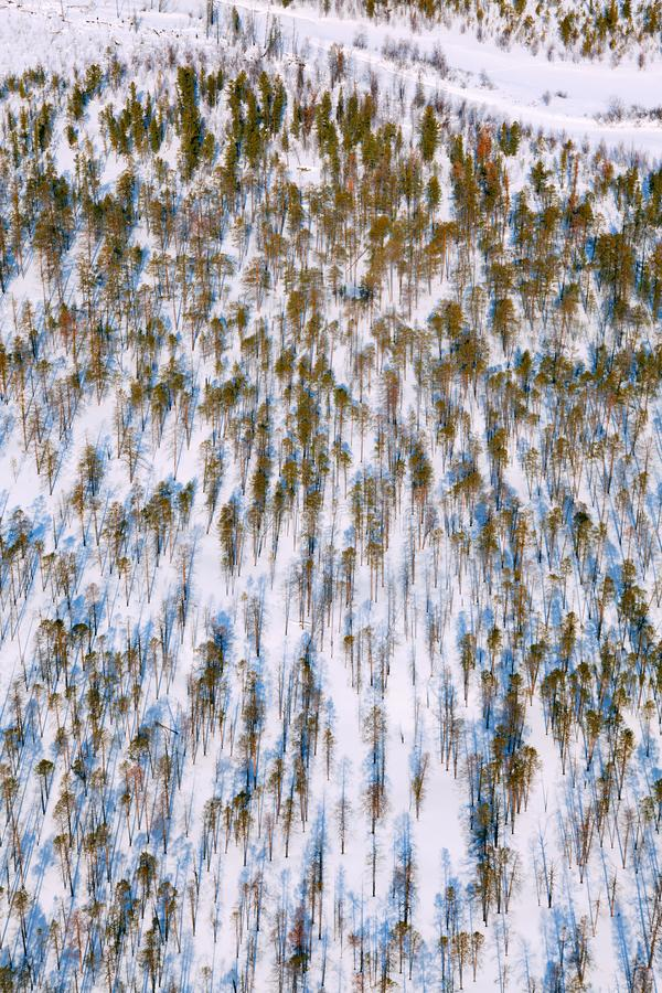 Pine woodlands, top view royalty free stock photo