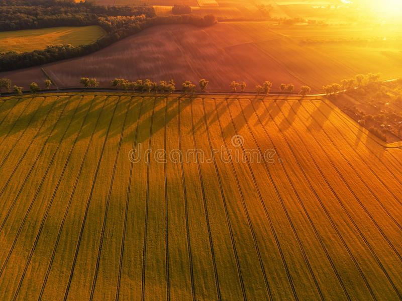 Aerial view of yellow canola field and distant country road stock images