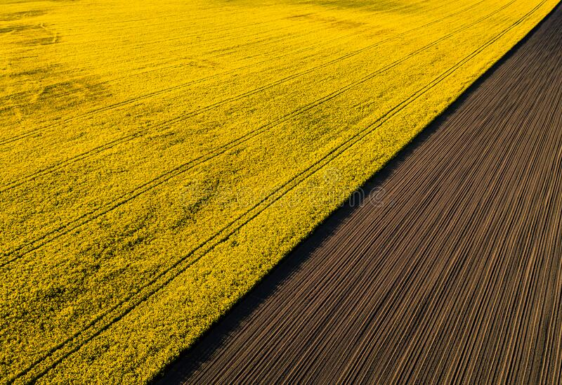 Drone view above yellow colza rape fields, agriculture concept from drone perspective royalty free stock photos