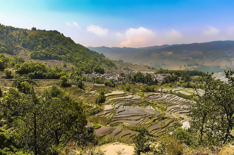 Aerial view of Yuanyang rice terraces royalty free stock photo