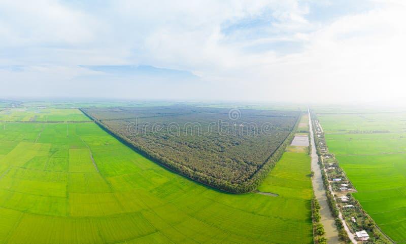 Aeriellt utseende av Tra Su-skogens turistpark Chau Doc bland risfält i regionen Mekong River Delta i Sydvietnamo Grönt ris royaltyfri foto