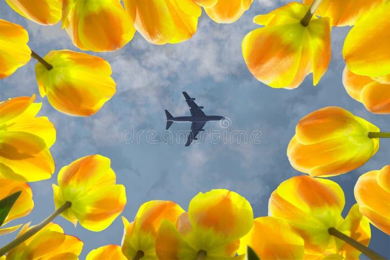 Aeroplano che sorvola i tulipani gialli di fioritura fotografie stock