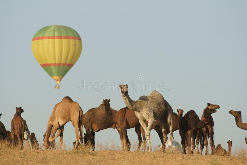 Aerostato e cammelli immagine stock