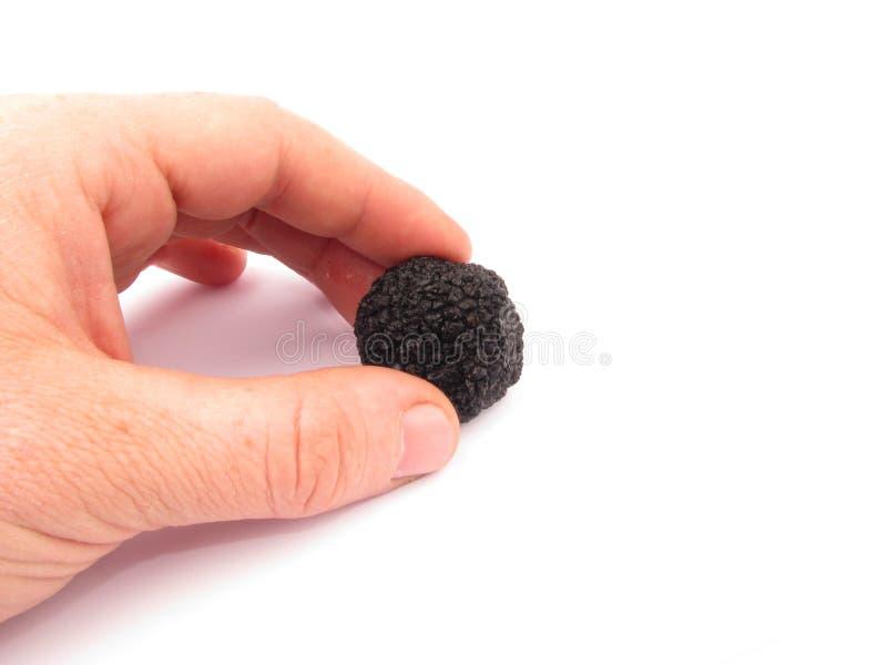Aestivum nero del tartufo-Tubero fotografia stock libera da diritti